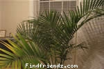 Houseplants - Gardening Indoors